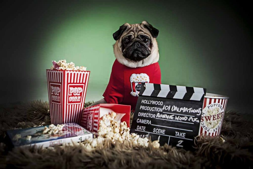 pug in jumper cinema theme studio portrait shoot