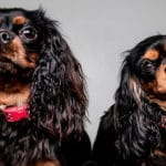 Pet dogs photography in our warrington studio