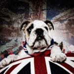British bulldog portrait Union Jack Bartley studios