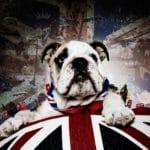 British bulldog portrait Union Jack Bartley studios